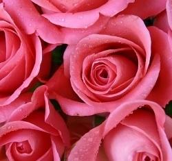 Geschenkidee zum Muttertag: Blumen