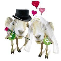 Einzigartige Hochzeitsgeschenke: Ziegenpaar von Oxfam